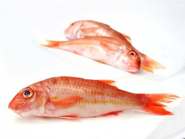 Whole red mullet