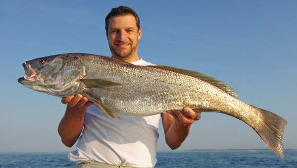 Man holding large stone bass or meagre