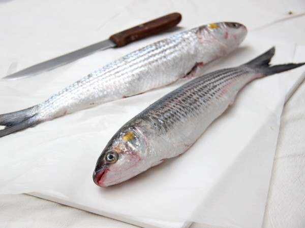 Grey mullet - whole