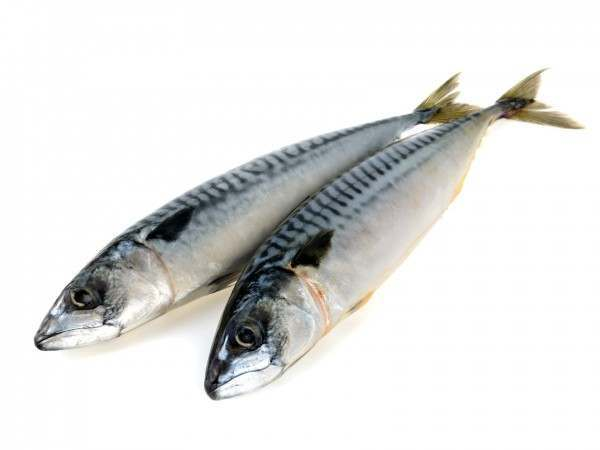 Two whole ungutted mackerel