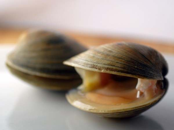 Cherrystone or Hardshell clams