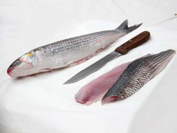 Whole grey mullet and grey mullet fillets