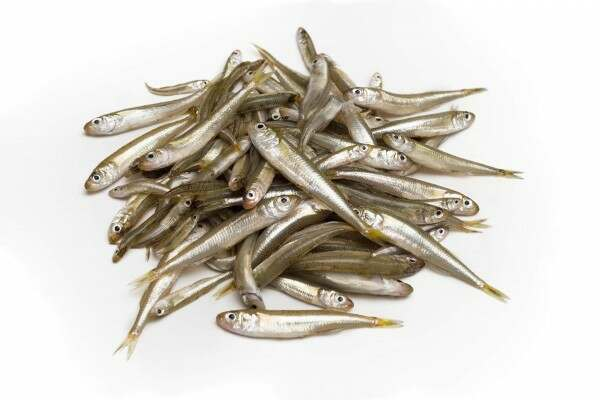 whitebait-index