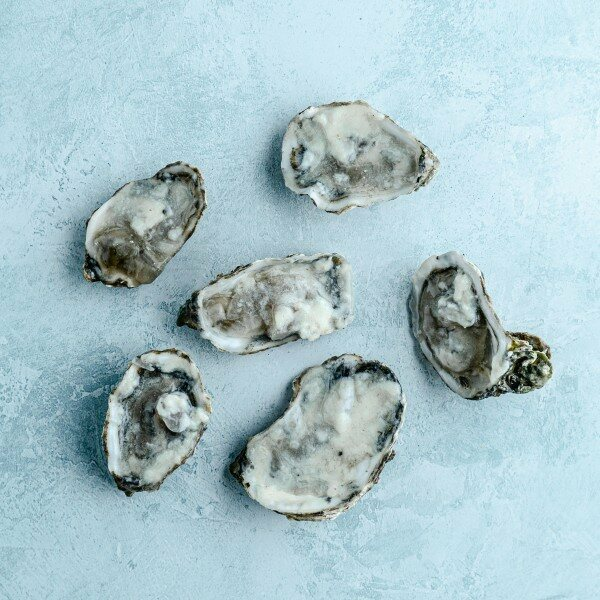 Half shell oysters with white wine sauce