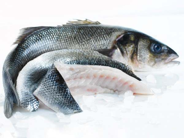 Whole sea bass and two whole fillets on white background
