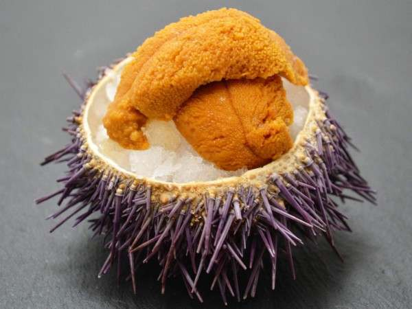 Uni sacs presented on ice in an urchin shell