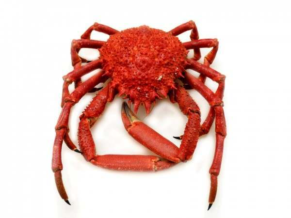 Spider crab - cooked