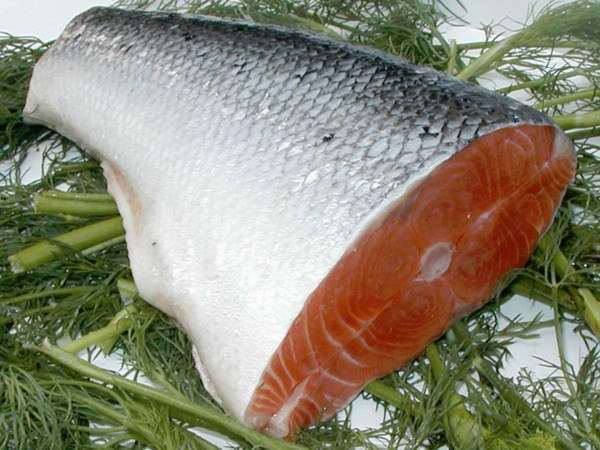 Salmon tail piece on stalks of dill