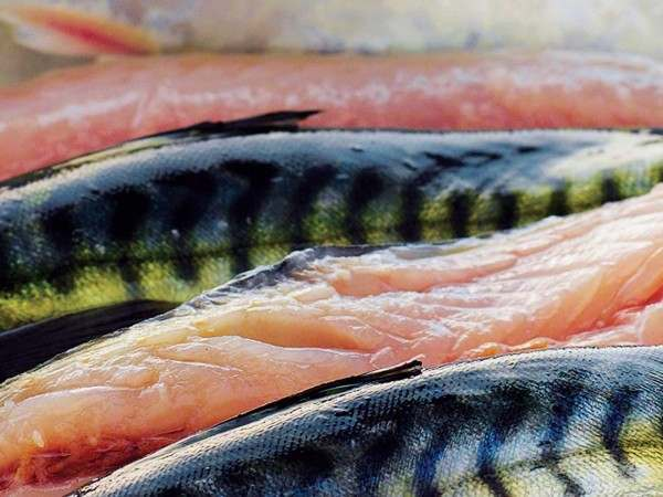 Four mackerel fillets with their skin on
