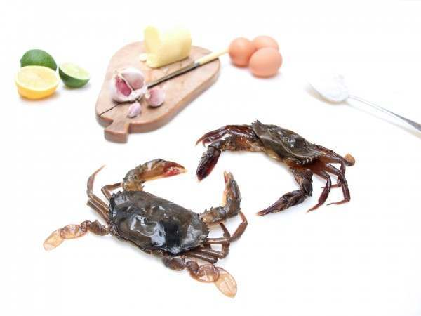 Two raw soft shell crabs