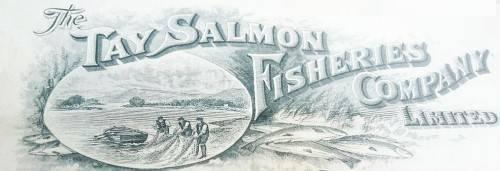 Tay salmon letterhead