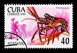 rock lobster stamp from Cuba