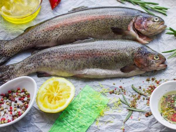 Two whole rainbow trout