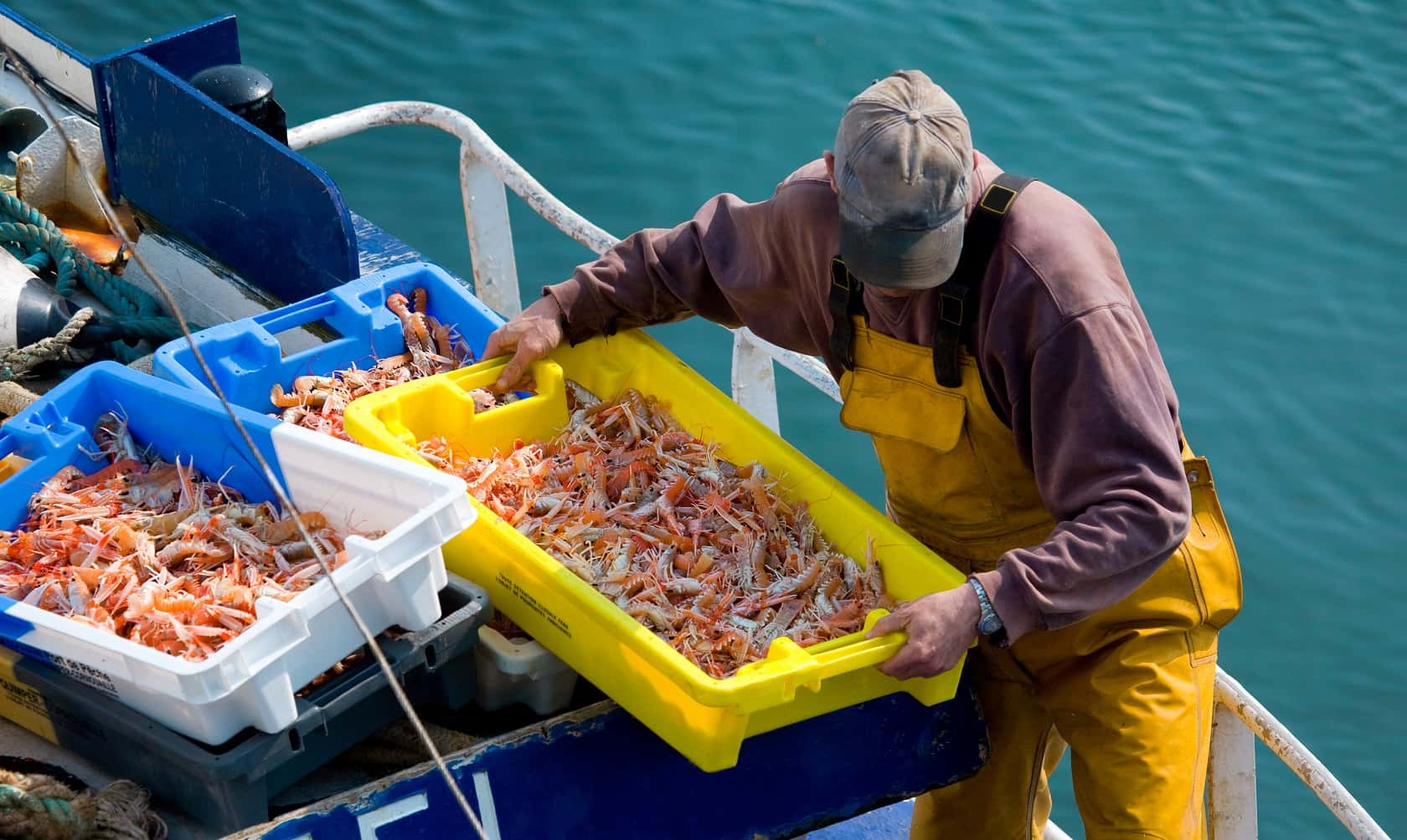 langoustine crates being landed from boat