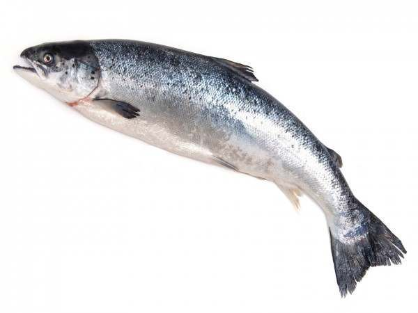 buy whole salmon online buy salmon and other gourmet seafood the