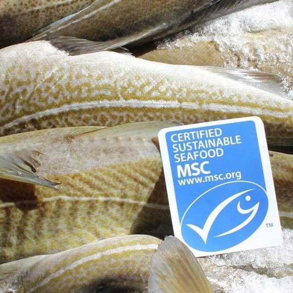 Sustainability-Icelanding-Cod