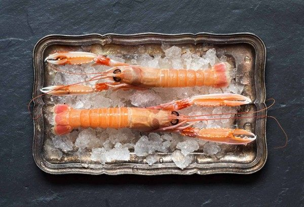 Two fine creel caught langoustines