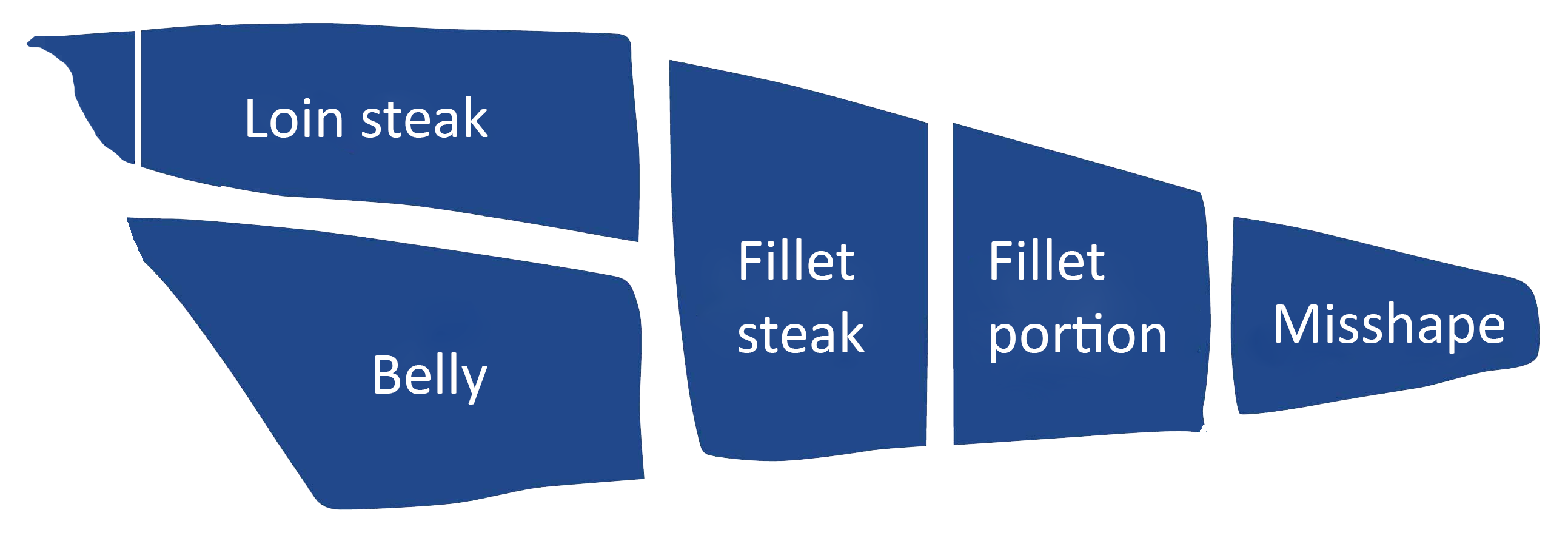 Fish-term-graphic-with-loin