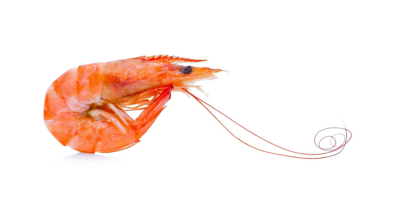 A Quick Guide To Prawns And Shrimp Fishopedia The Fish Society