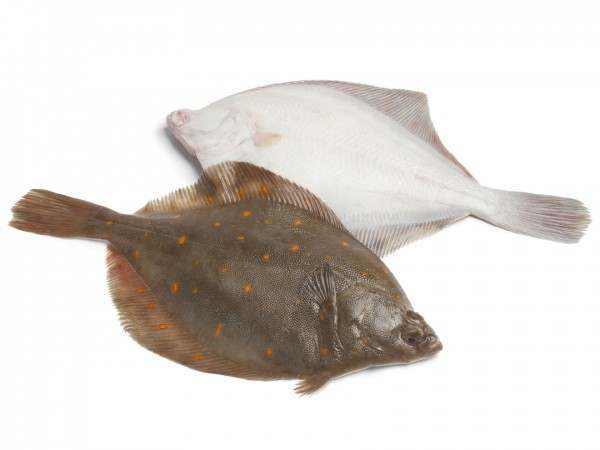 Two whole plaice